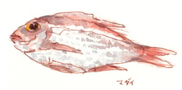 真鯛のイラスト