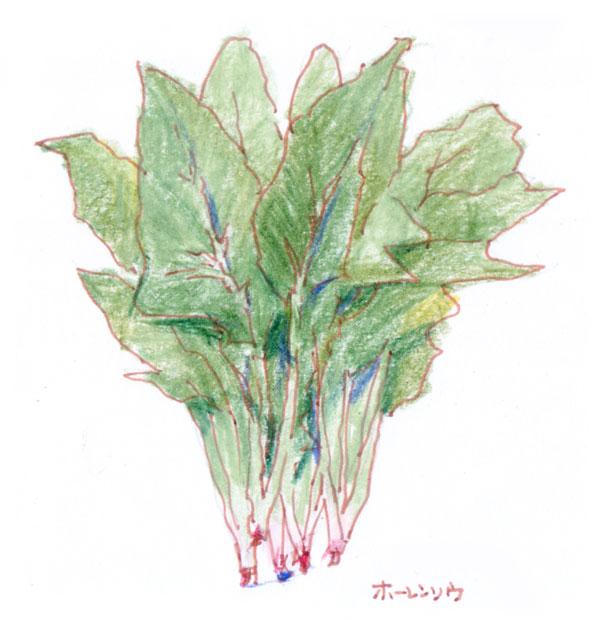 緑黄色野菜ほうれん草